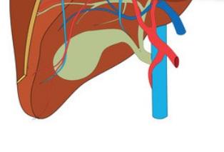 Gastroenterology Fellowship Statistics